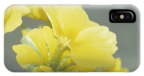 Primula Polyanthus 'hose In Hose' Phone Case by Archie Young