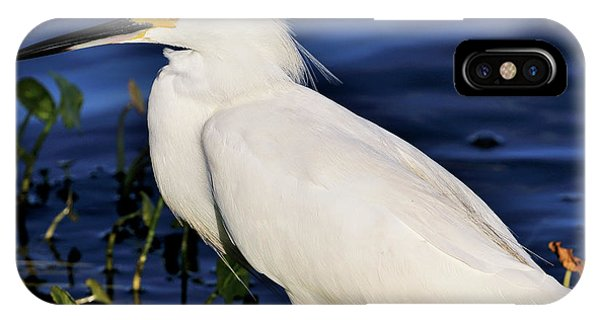 Profile Of A Snowy Egret IPhone Case