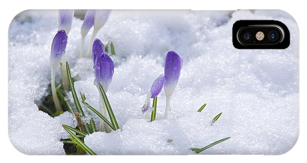 Promise Of Spring IPhone Case