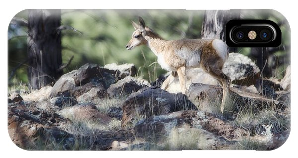 Pronghorn Antelope Fawn IPhone Case