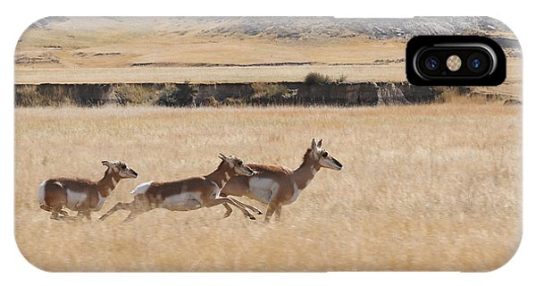 Pronghorn Antelopes On The Run IPhone Case