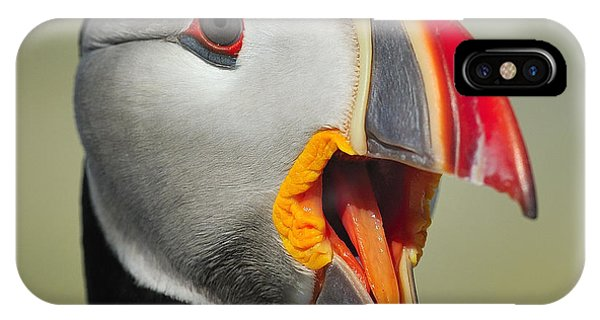 Puffin Portrait IPhone Case