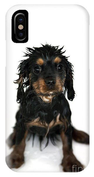 King Charles iPhone Case - Puppy Bathtime by Jane Rix