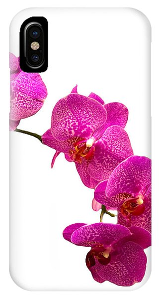Purple Orchid On White IPhone Case