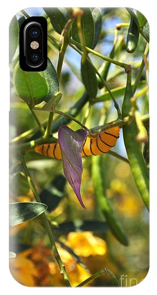 Purple Pink Green Chrysalis  IPhone Case