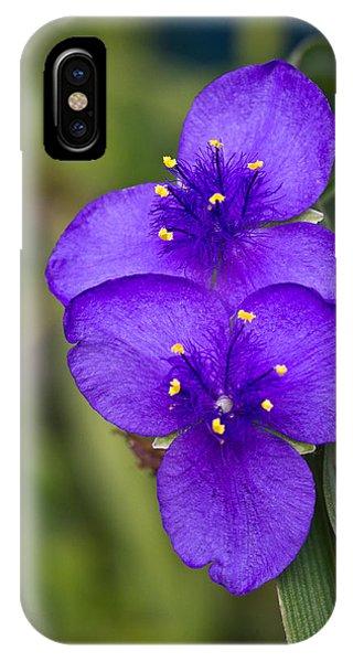 Tradescantia iPhone Case - Purple Spiderwort 2 by Douglas Barnett