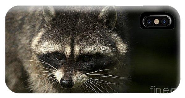 Raccoon 2 IPhone Case
