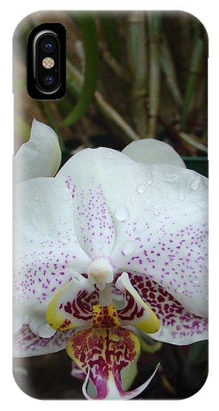 Rain Drops On Orchid IPhone Case