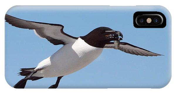 Razorbill iPhone Case - Razorbill In Flight by Bruce J Robinson