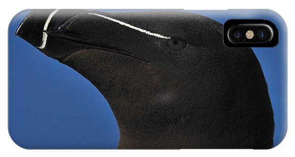 Razorbill iPhone Case - Razorbill Portrait by Tony Beck