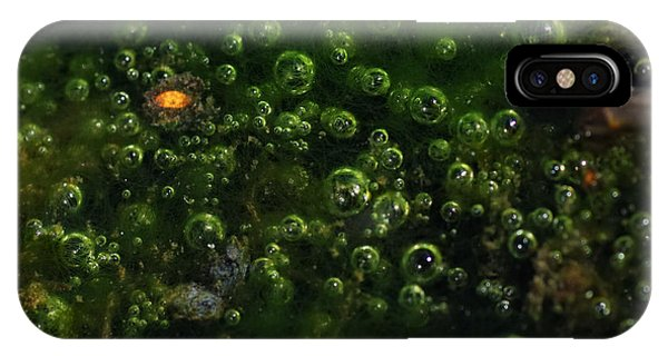 Alga iPhone X Case - Rebirth On The Waters Edge by Susan Capuano