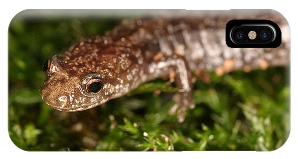 Red-backed Salamander IPhone Case