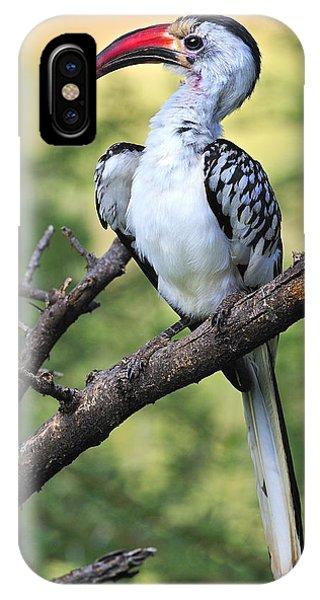 Red-billed Hornbill IPhone Case