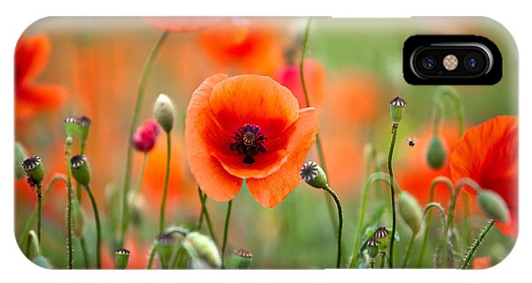 Petals iPhone Case - Red Corn Poppy Flowers 05 by Nailia Schwarz
