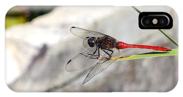 Red Dragonfly iPhone Cases (Page #2 of 23) | Fine Art America