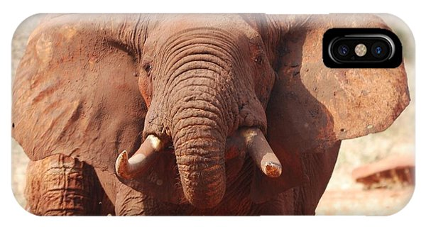 Red Elephant Drinking Phone Case by Alan Clifford