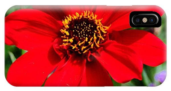 Spring iPhone Case - Red Flower by Luisa Azzolini