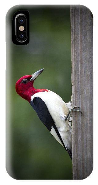 Red Headed Woodpecker Hdr - Artist Cris Hayes IPhone Case
