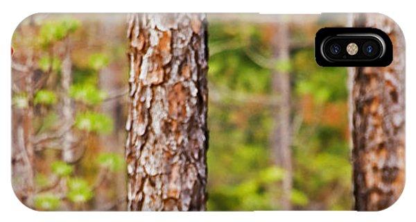 Red Headed Woodpecker On The Pine Savanna IPhone Case