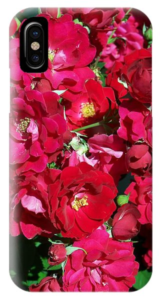 Red Rose Bush IPhone Case