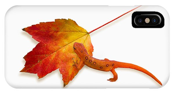 Newts iPhone Case - Red Spotted Newt by Ron Jones
