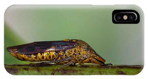 Red Winged Bug Phone Case by Craig Lapsley