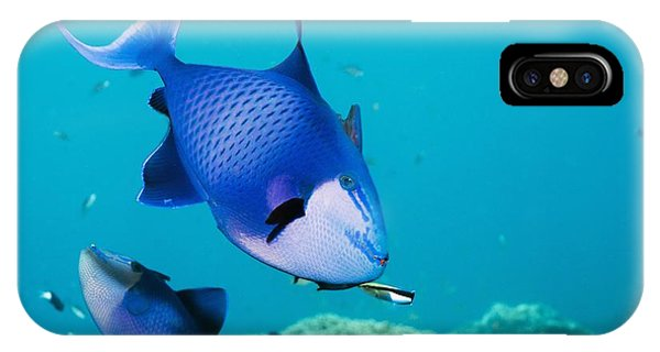 Redtoothed Triggerfish Phone Case by Georgette Douwma