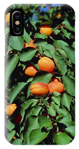Ripe Apricots Growing On A Branch Phone Case by Kaj R. Svensson