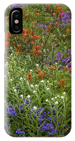 Scarlet Paintbrush iPhone Case - Roadside Flowers, Cascade Mountains, Usa by Bob Gibbons