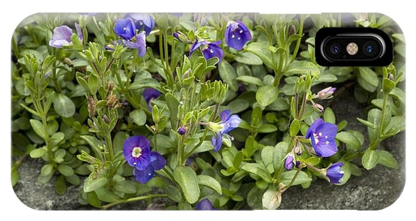 Rock Speedwell (veronica Fruticans) Phone Case by Bob Gibbons