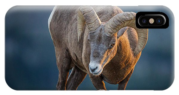 Rocky Mountain Big Horn Ram IPhone Case