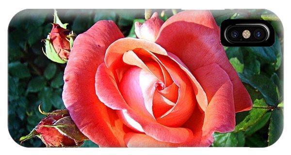 Rose In Setting Sun IPhone Case