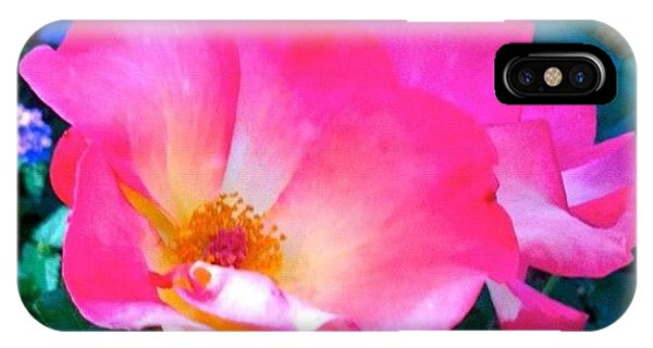 Petals iPhone Case - Roses From Anna's Gardens by Anna Porter
