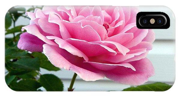 Royal Kate Rose IPhone Case