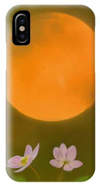 Rue Anemone And The Rising Sun IPhone Case