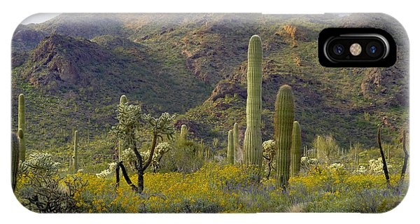 Teddy Bear Cholla iPhone Case - Saguaro And Teddybear Cholla by Tim Fitzharris