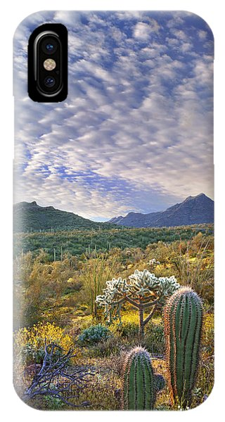 Teddy Bear Cholla iPhone Case - Saguaro Carnegiea Gigantea by Tim Fitzharris