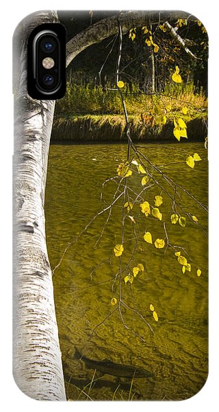 Salmon During The Fall Migration In The Little Manistee River In Michigan No. 0887 IPhone Case