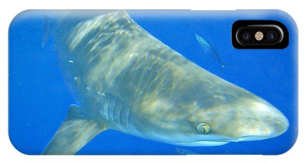 Sandbar Shark IPhone Case