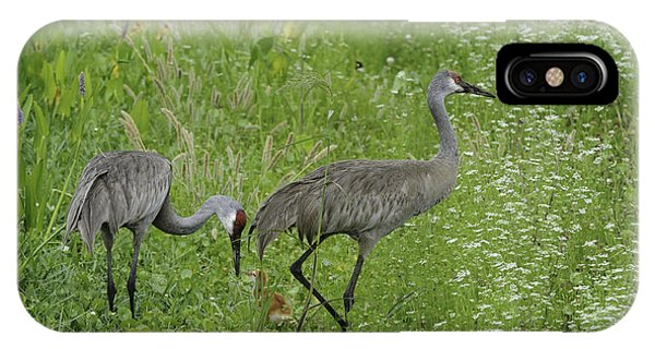 Sandhill Cranes And Chick IPhone Case