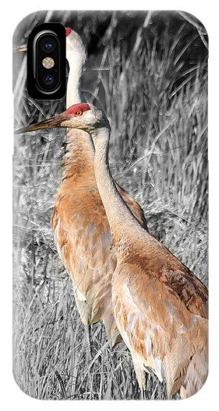 Sandhill Cranes In Select Color IPhone Case