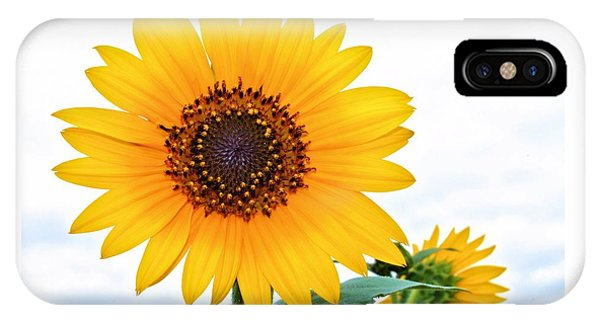 Sassy Sunflower IPhone Case