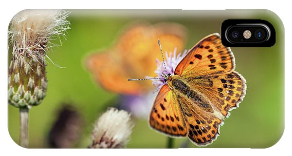 Scarce Copper Butterfly IPhone Case