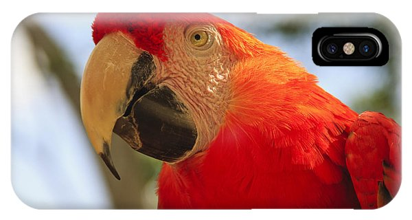 Macaw iPhone Case - Scarlet Macaw Parrot by Adam Romanowicz