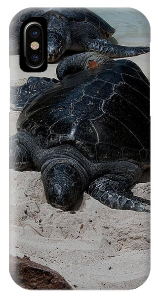 Sea Turtles IPhone Case