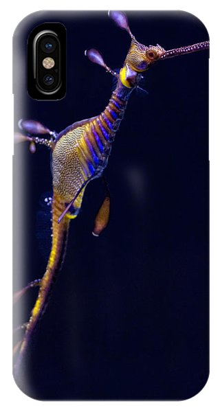 Seadragon  Phone Case by Donna Pagakis
