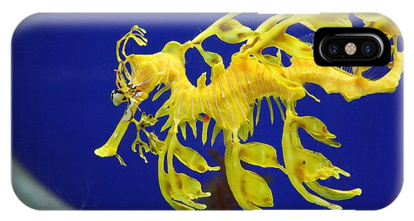 Seadragon IPhone Case