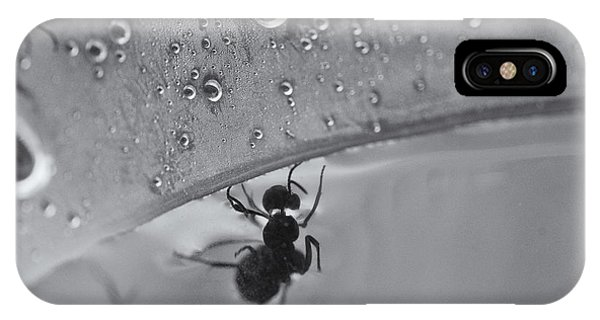 Ant iPhone Case - Search And Rescue by Susan Capuano
