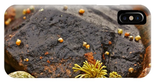 Seashells By The Seashore IPhone Case