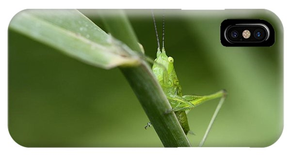Secretive Katydid IPhone Case